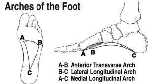 arches-of-the-foot