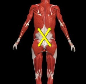 lat-to-glute